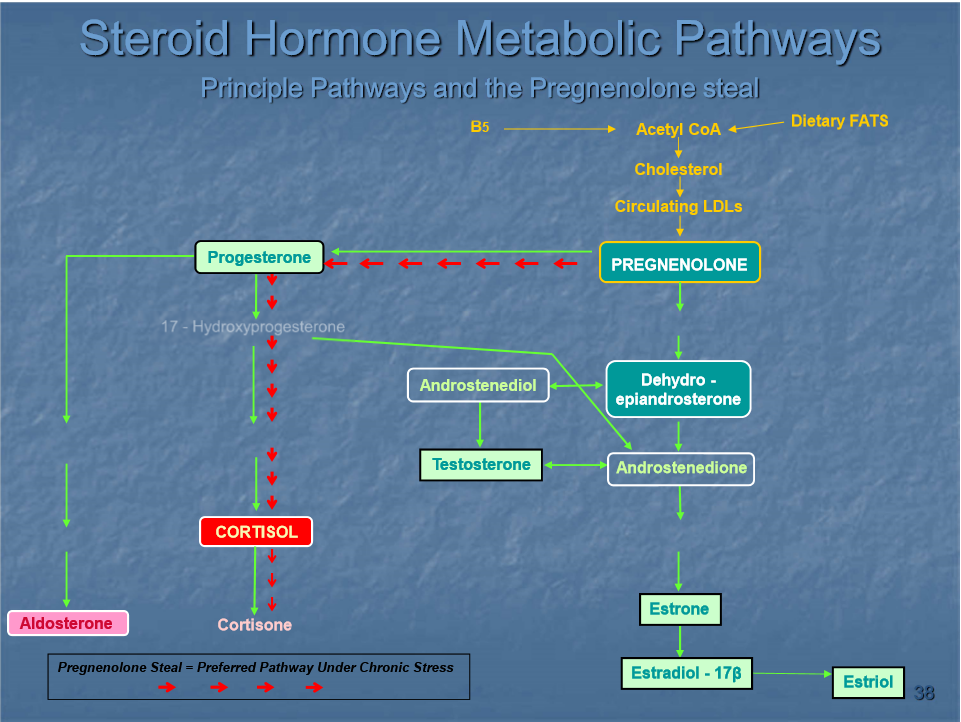 Steroid hormone metabolic pathways, stress and weight loss | Shawn Phillips Holistic Personal Trainer Los Angeles
