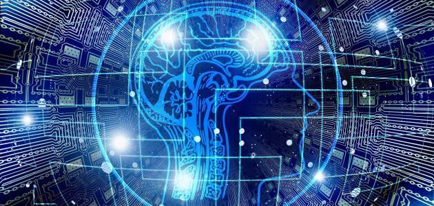 Brain system, Brain health, brain health supplements | Shawn Phillips Personal Trainer, Nutritionist Los Angeles