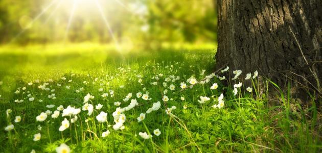 Wild flowers, benefits of sunlight, lack of sunlight | Shawn Phillips Personal Trainer & Nutritionist Los Angeles